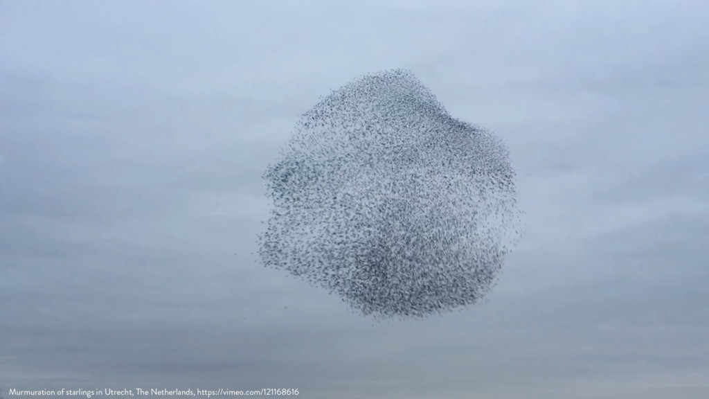 Murmuration of starlings in Utrecht, The Nether...
