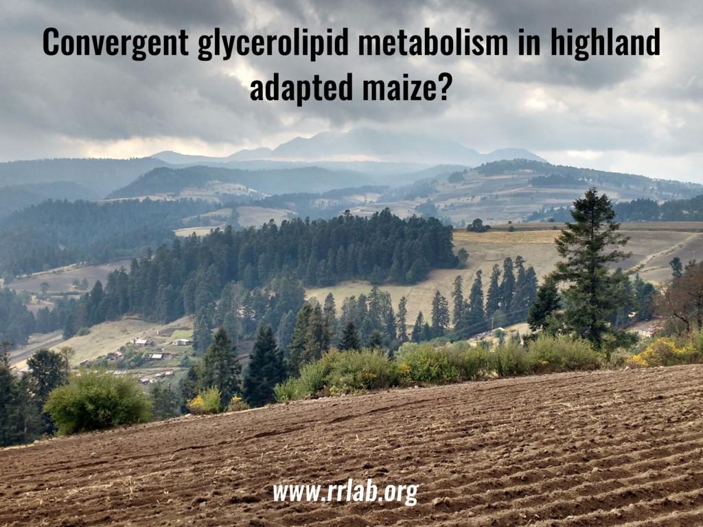 Convergent glycerolipid metabolism in highland ...