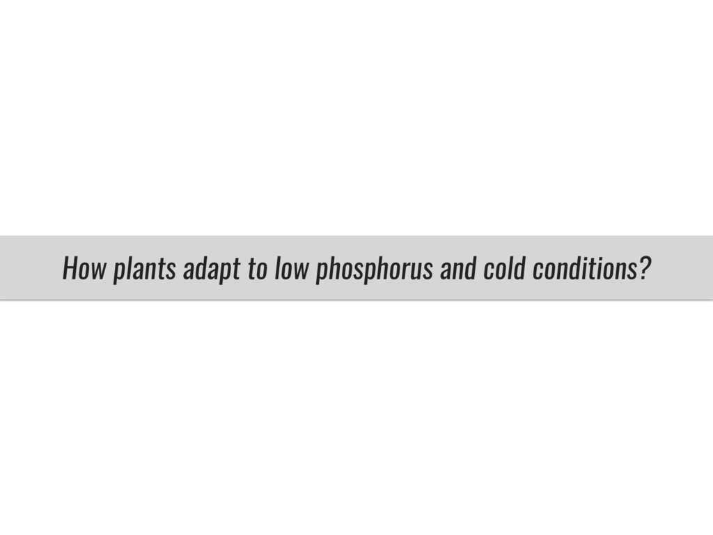 How plants adapt to low phosphorus and cold con...
