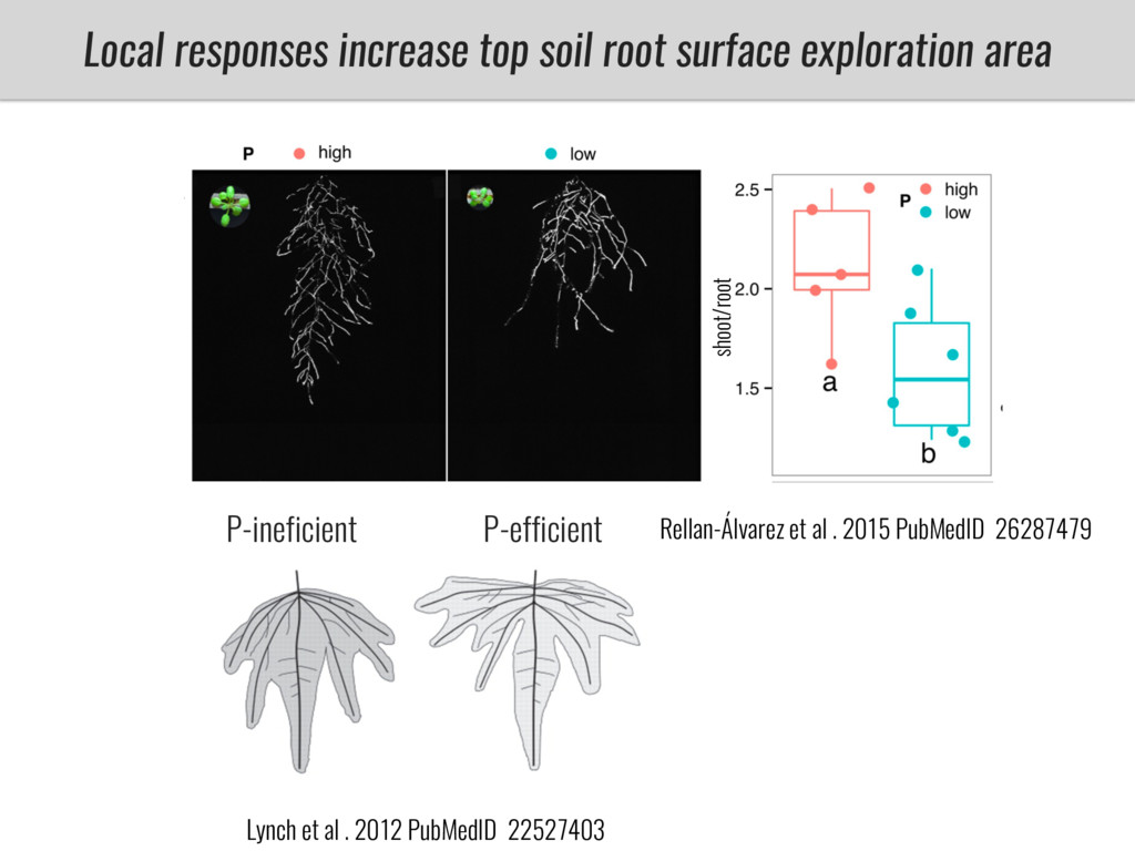 Local responses increase top soil root surface ...