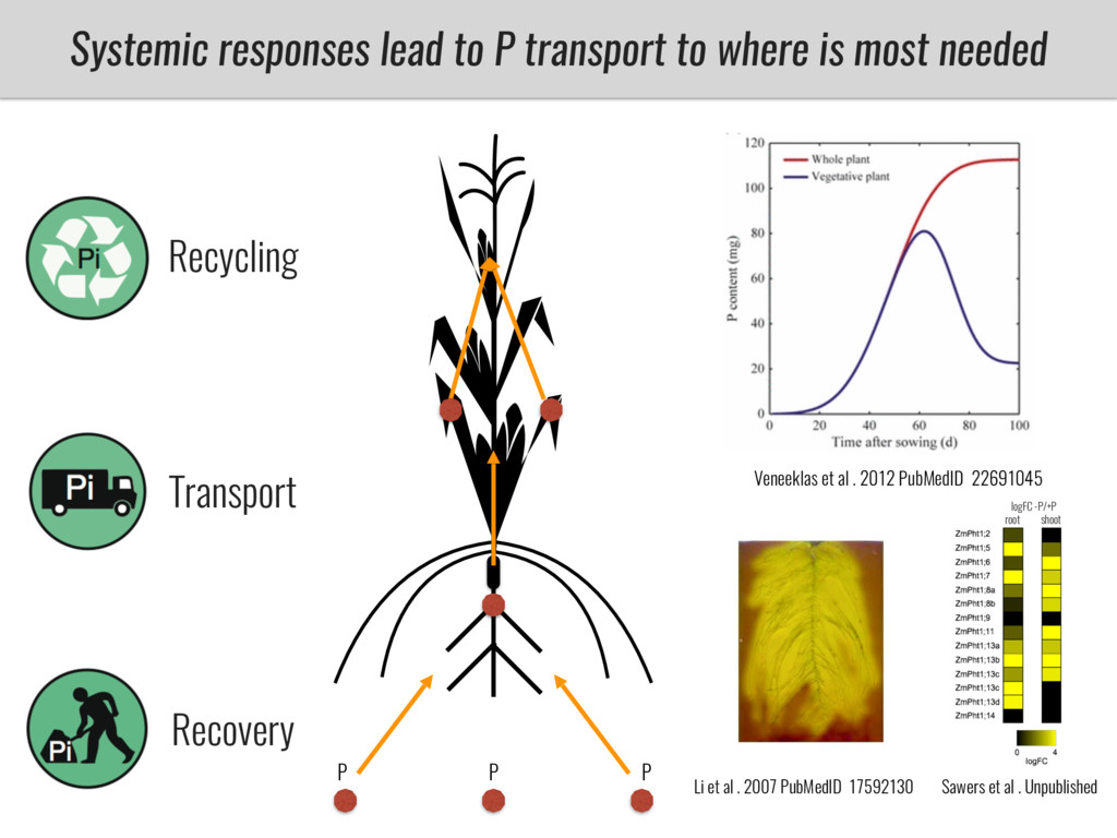 Recovery Transport Recycling Systemic responses...
