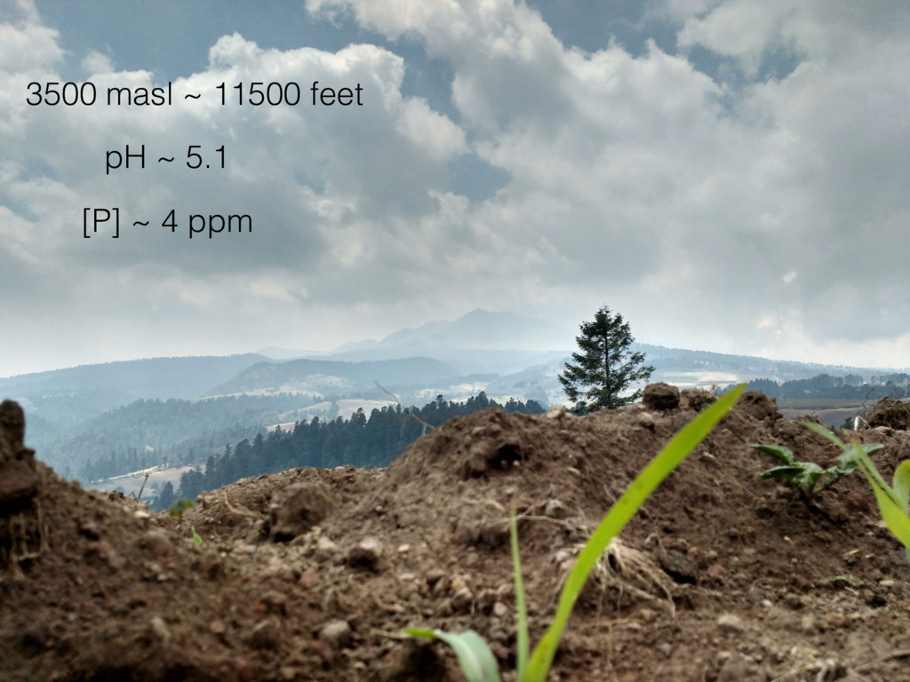 3500 masl ~ 11500 feet pH ~ 5.1 [P] ~ 4 ppm