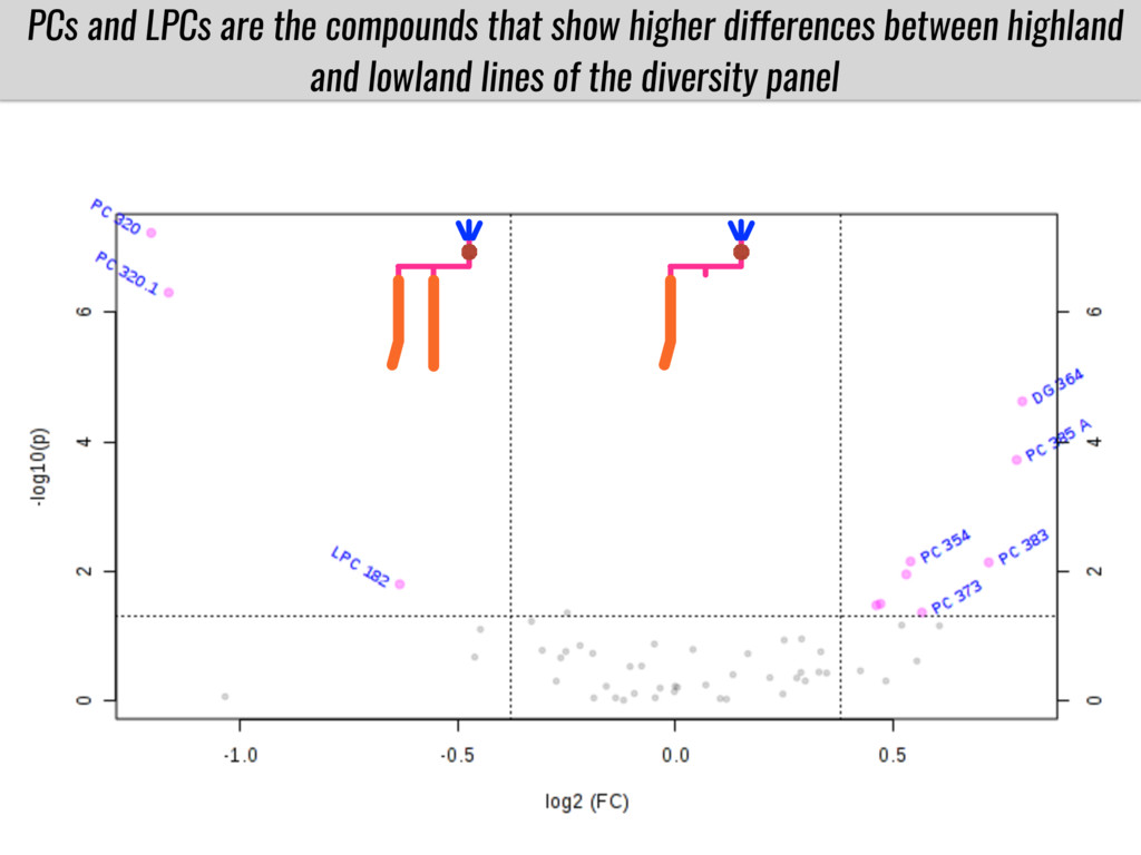 PCs and LPCs are the compounds that show higher...
