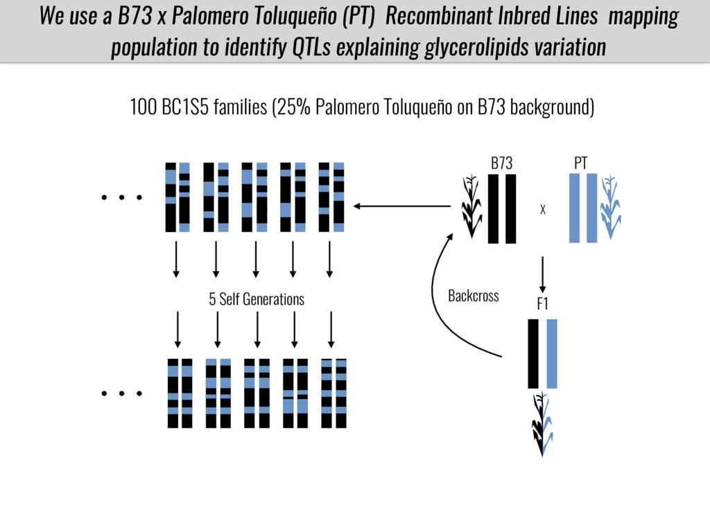 We use a B73 x Palomero Toluqueño (PT) Recombin...