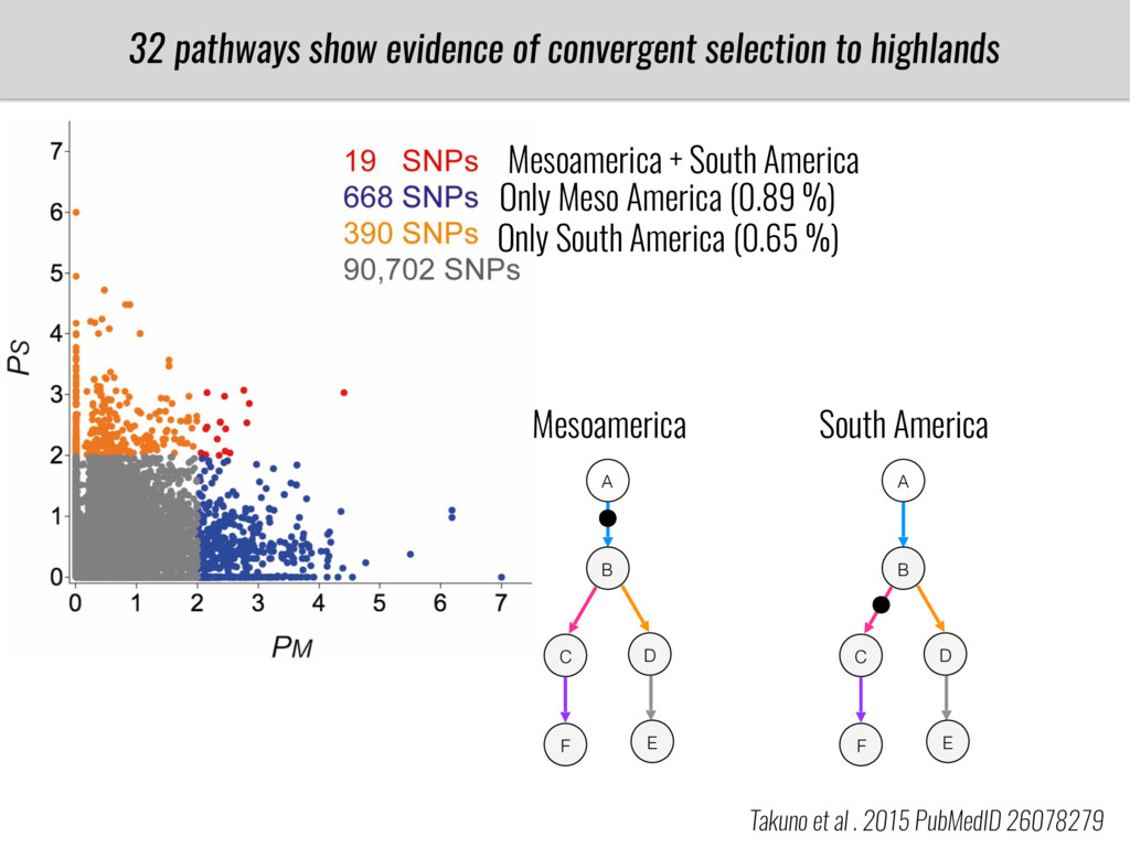 32 pathways show evidence of convergent selecti...