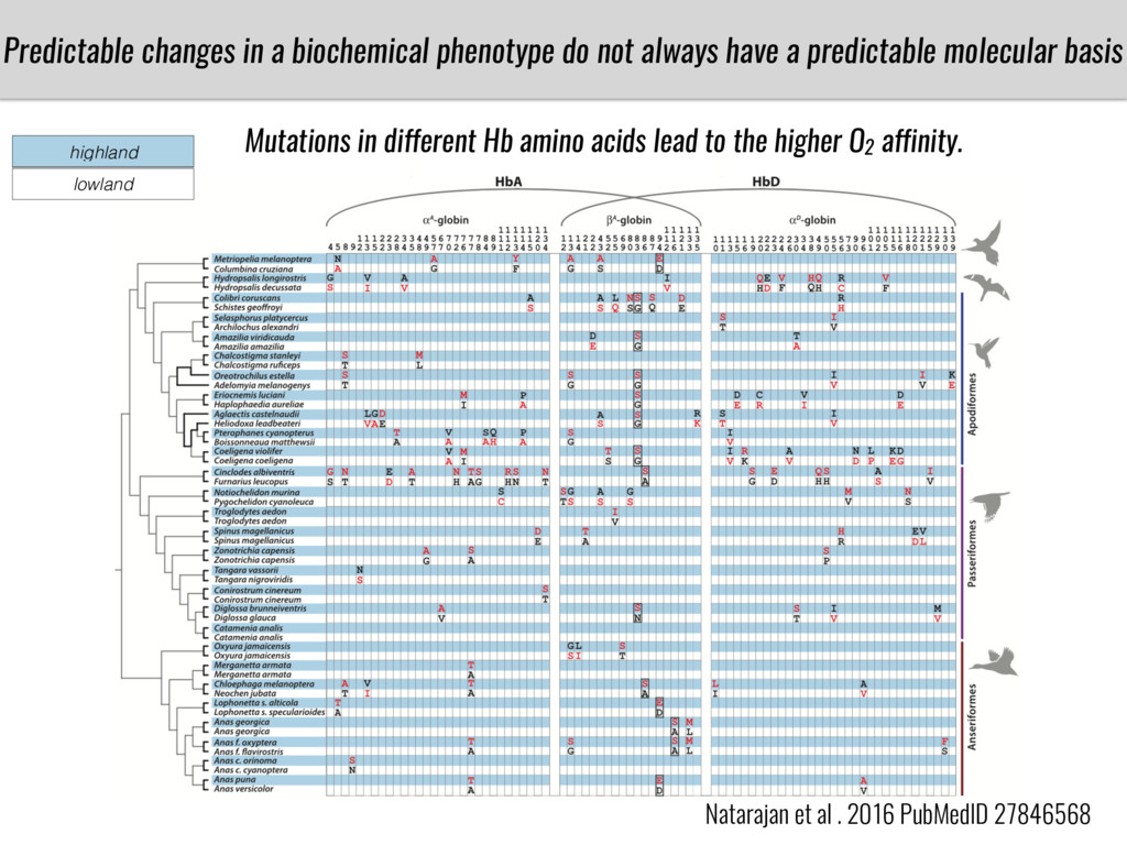 Predictable changes in a biochemical phenotype ...