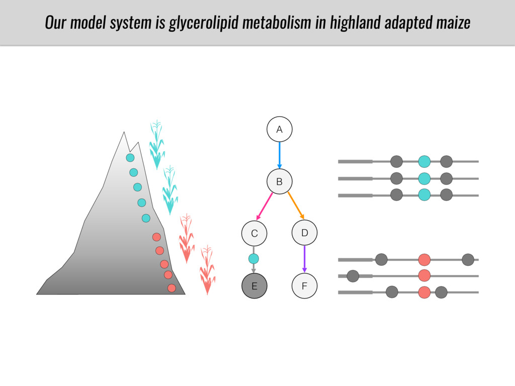 A B C D E F Our model system is glycerolipid me...