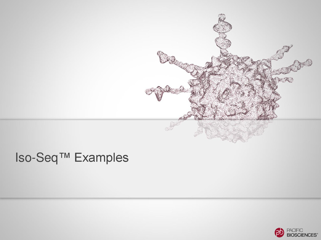 Iso-Seq™ Examples