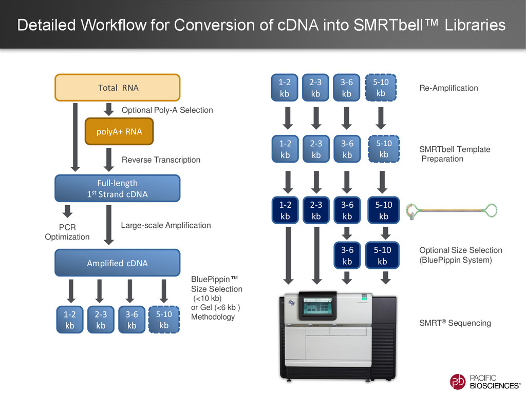 Detailed Workflow for Conversion of cDNA into S...