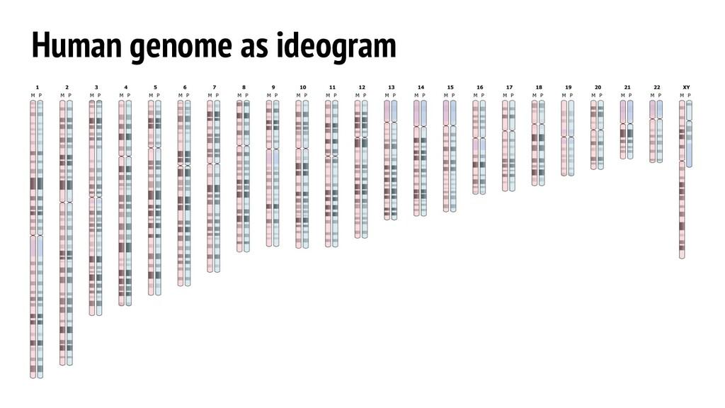 Human genome as ideogram