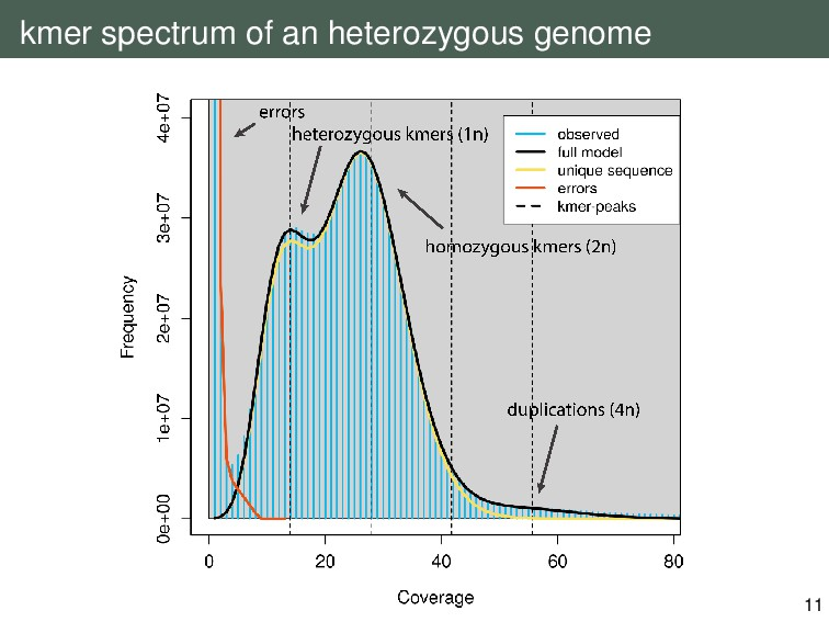 kmer spectrum of an heterozygous genome 11