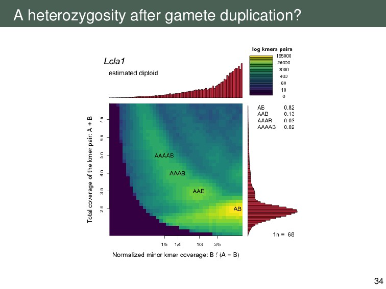 A heterozygosity after gamete duplication? 34