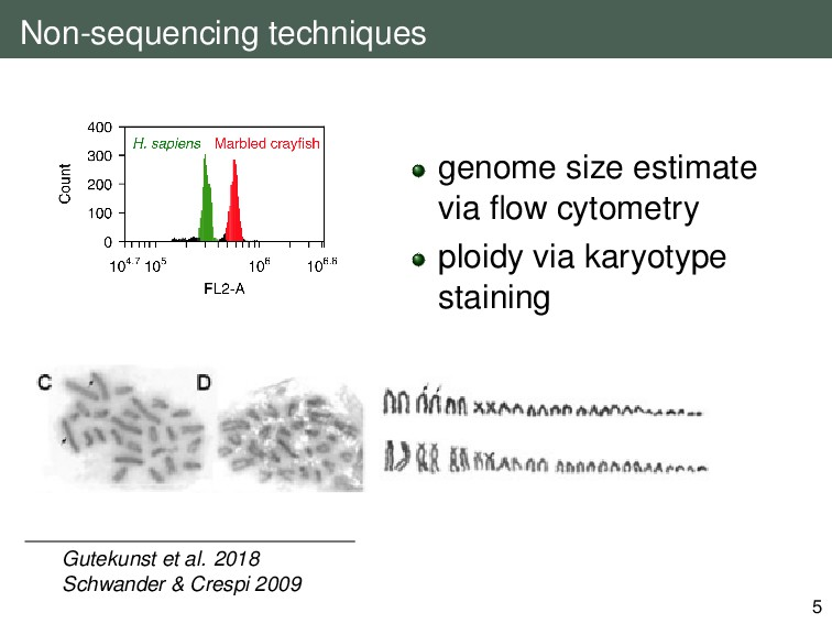 Non-sequencing techniques genome size estimate ...
