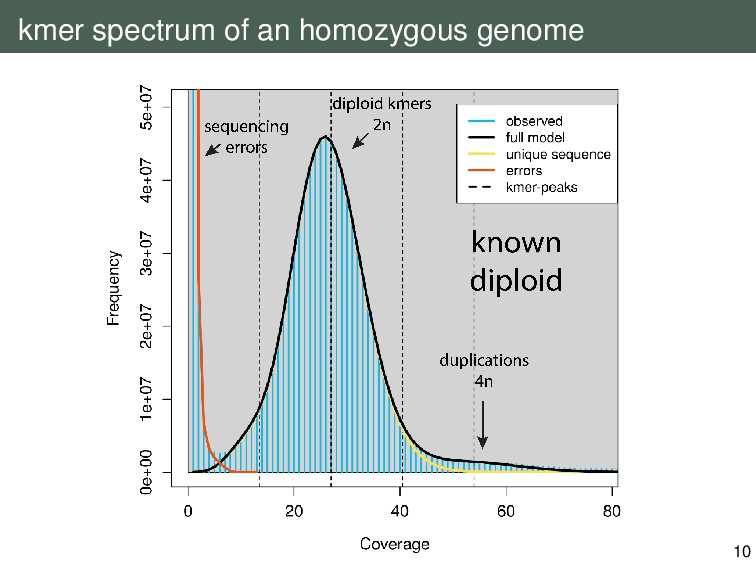 kmer spectrum of an homozygous genome 10