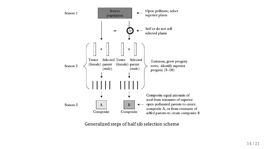 Generalized steps of half sib selection scheme ...