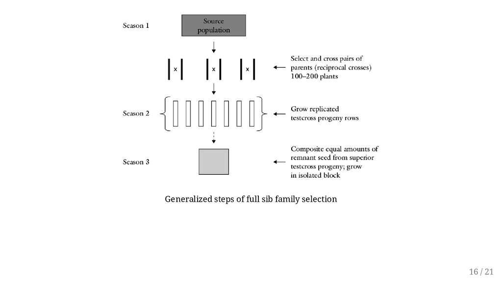 Generalized steps of full sib family selection ...