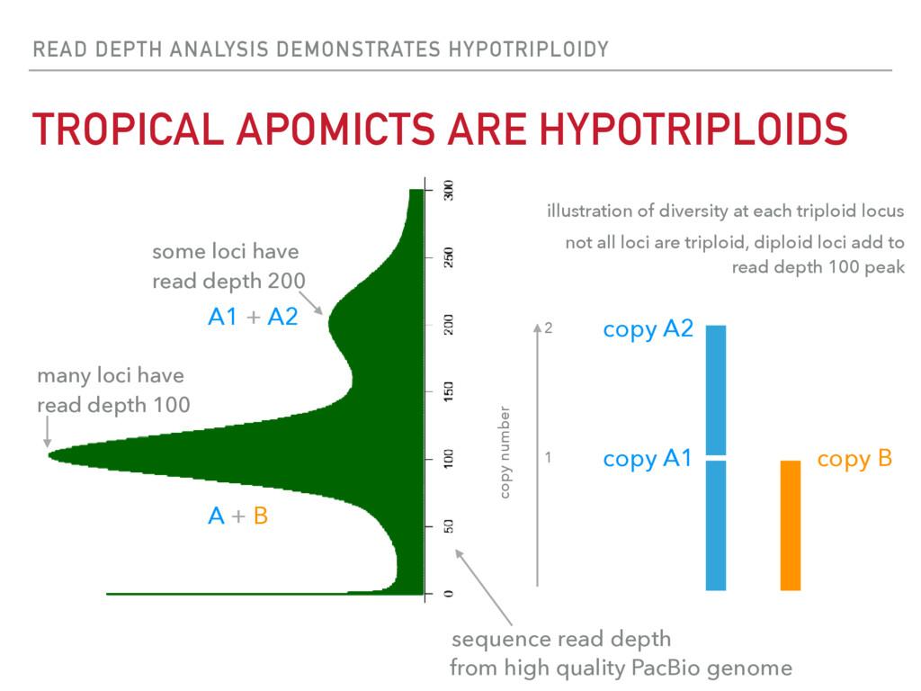 READ DEPTH ANALYSIS DEMONSTRATES HYPOTRIPLOIDY ...