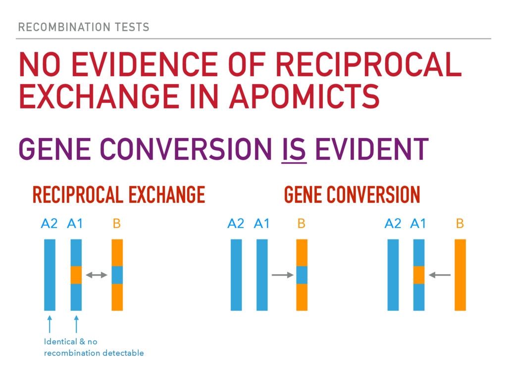 RECOMBINATION TESTS NO EVIDENCE OF RECIPROCAL E...
