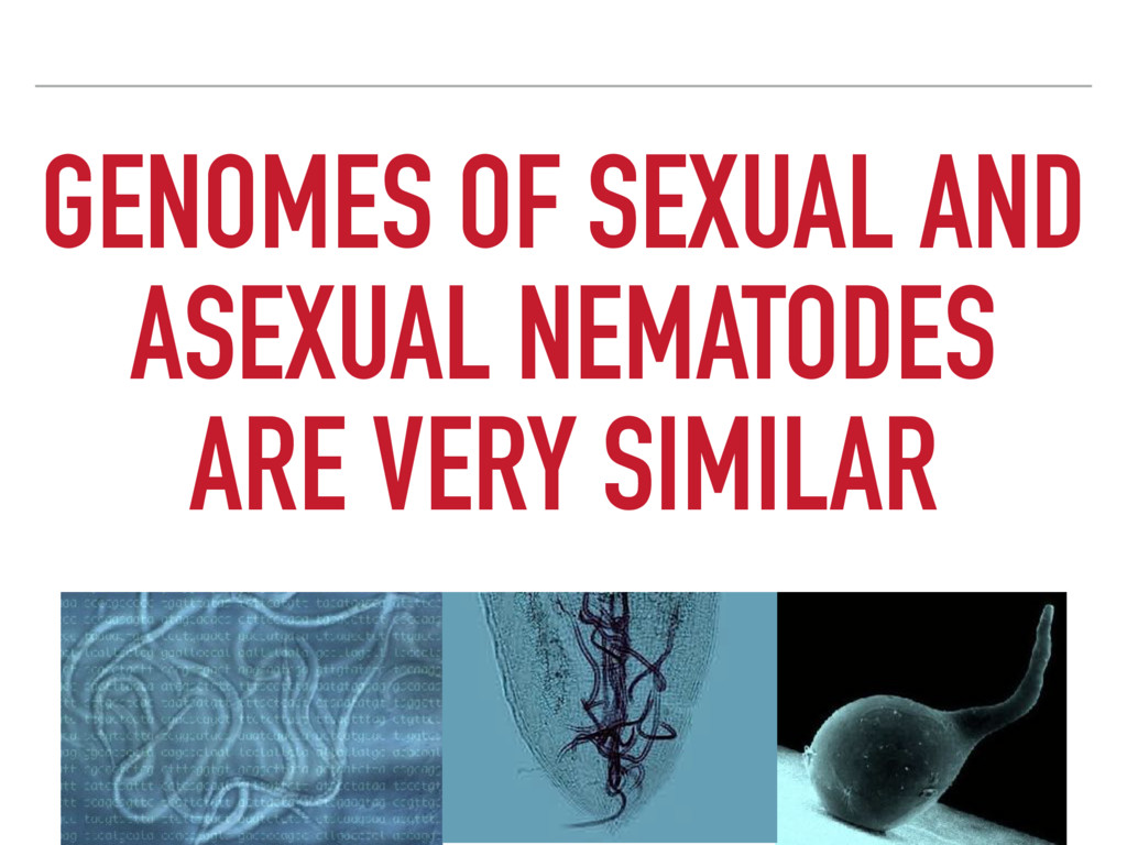 GENOMES OF SEXUAL AND ASEXUAL NEMATODES ARE VER...