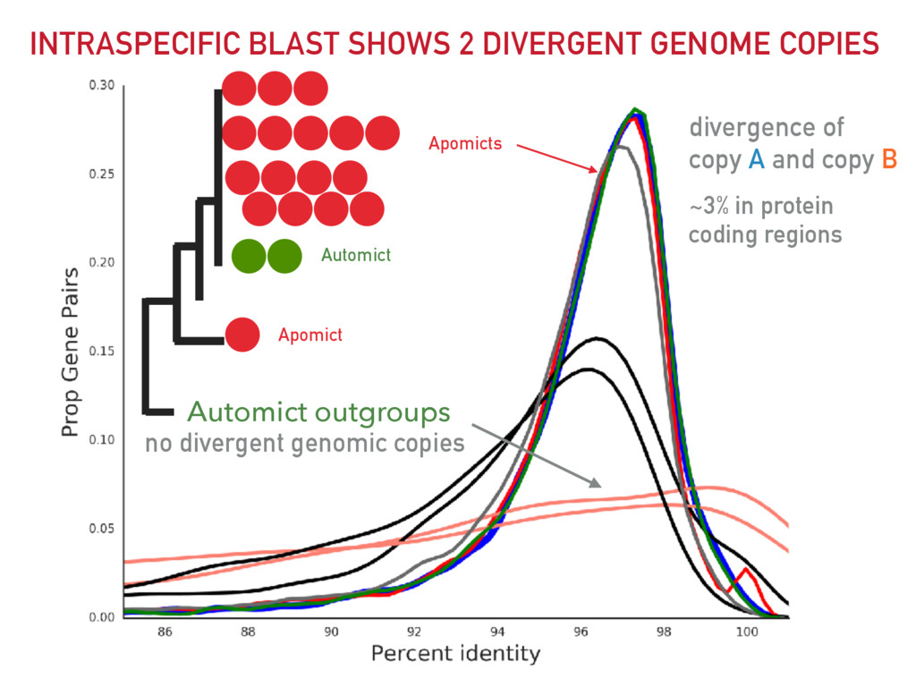 INTRASPECIFIC BLAST SHOWS 2 DIVERGENT GENOME CO...