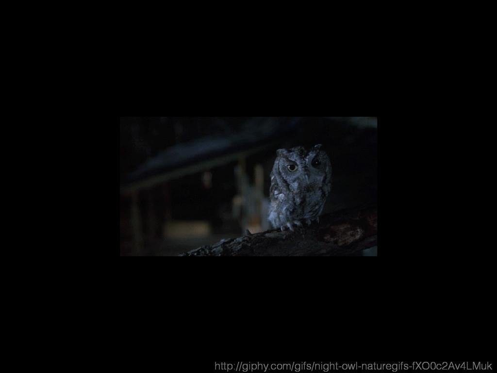 http://giphy.com/gifs/night-owl-naturegifs-fXO0...