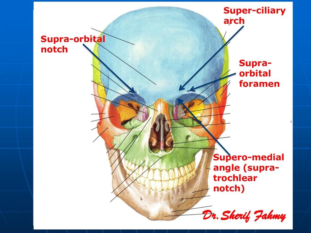Supra-orbital notch Super-ciliary arch Supero-m...