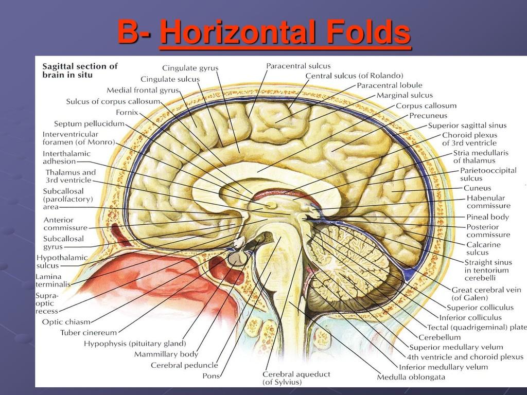B- Horizontal Folds