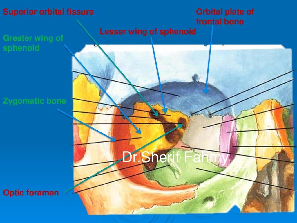 Orbital plate of frontal bone Lesser wing of sp...