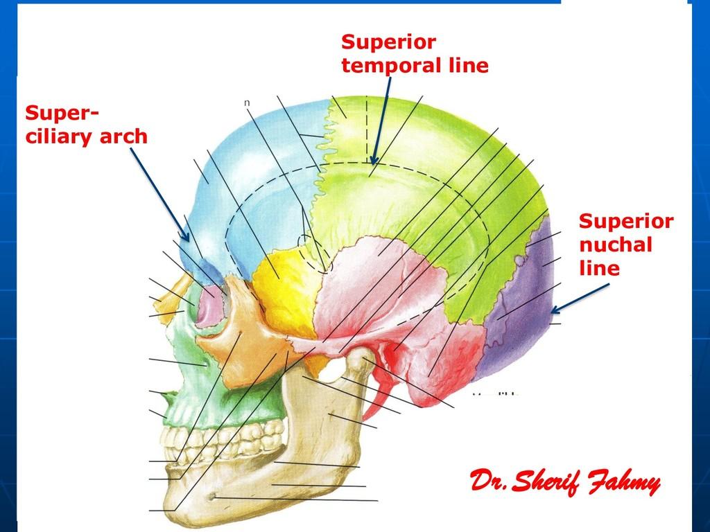 Superior temporal line Super- ciliary arch Supe...