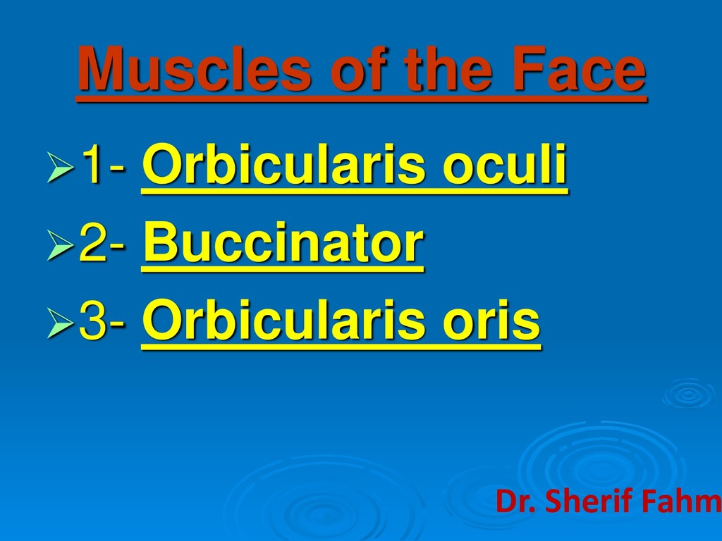 Muscles of the Face ➢1- Orbicularis oculi ➢2- B...