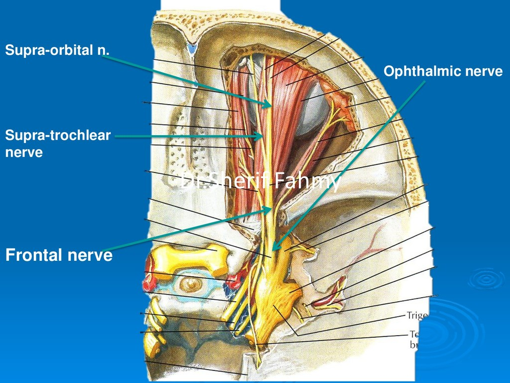 Ophthalmic nerve Frontal nerve Supra-trochlear ...