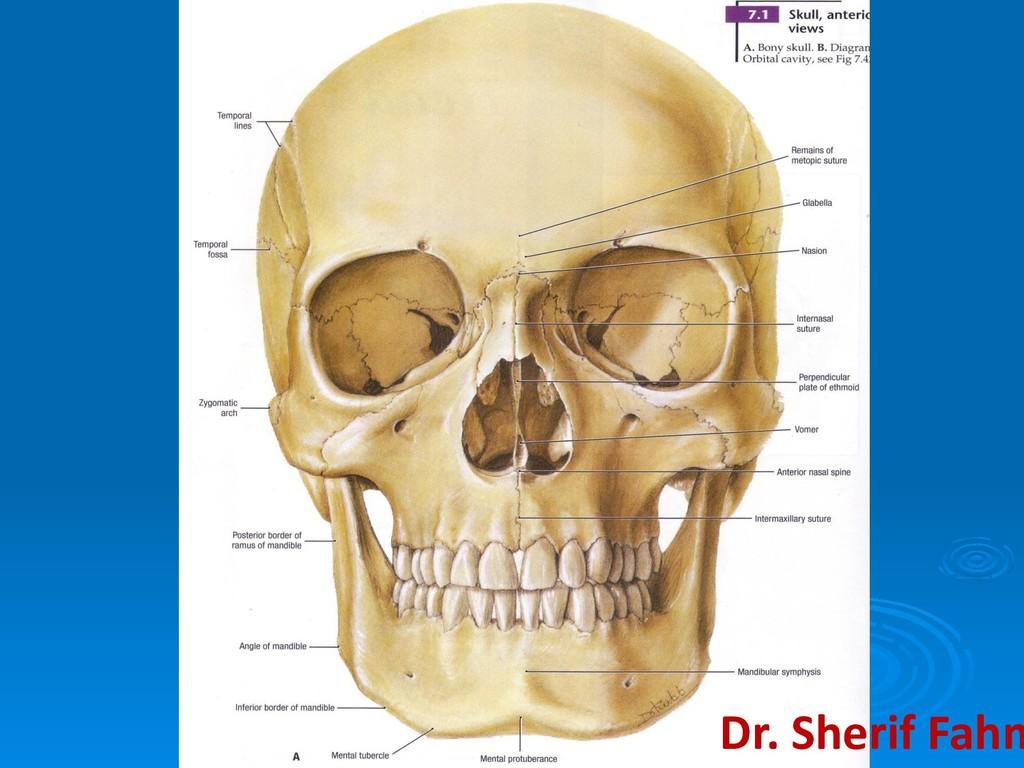 Dr. Sherif Fahm