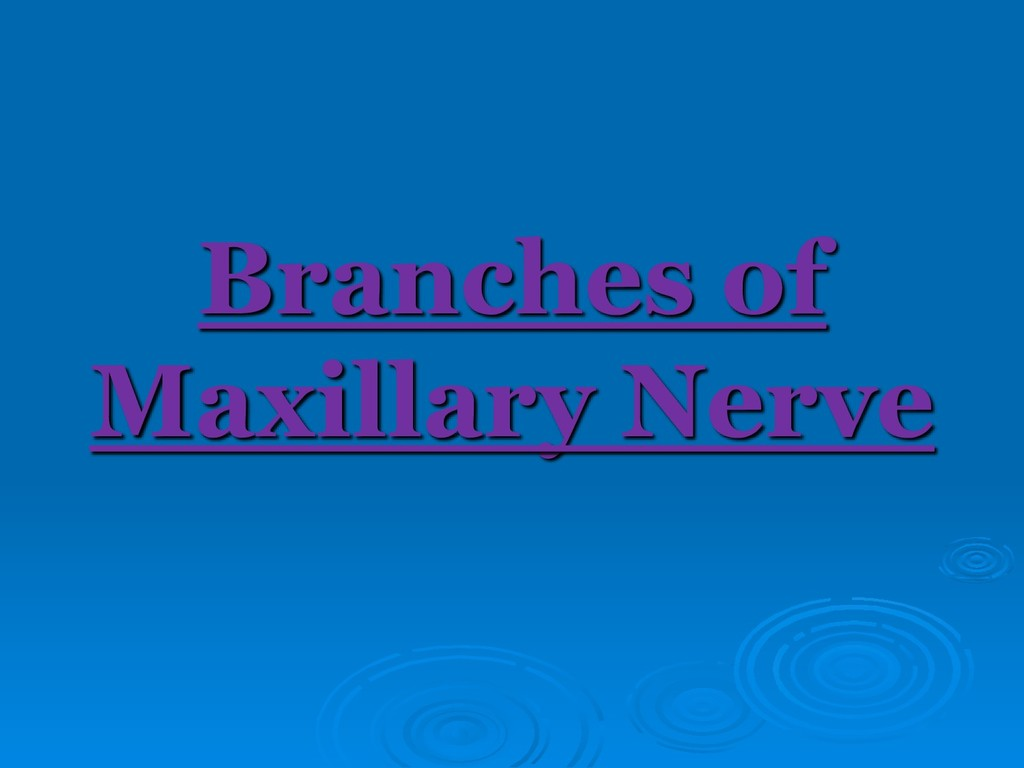 Branches of Maxillary Nerve