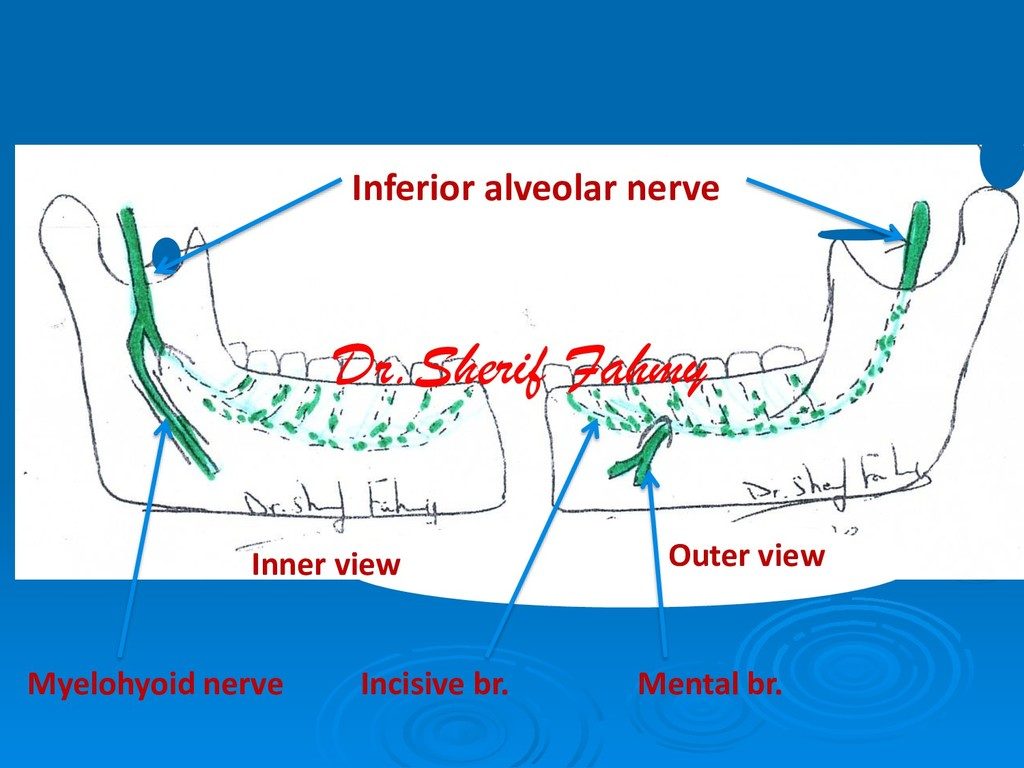 Inner view Outer view Inferior alveolar nerve M...