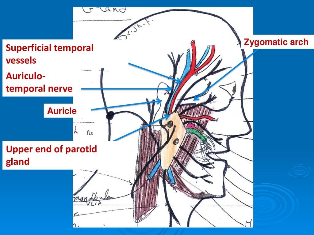 Auriculo- temporal nerve Superficial temporal v...
