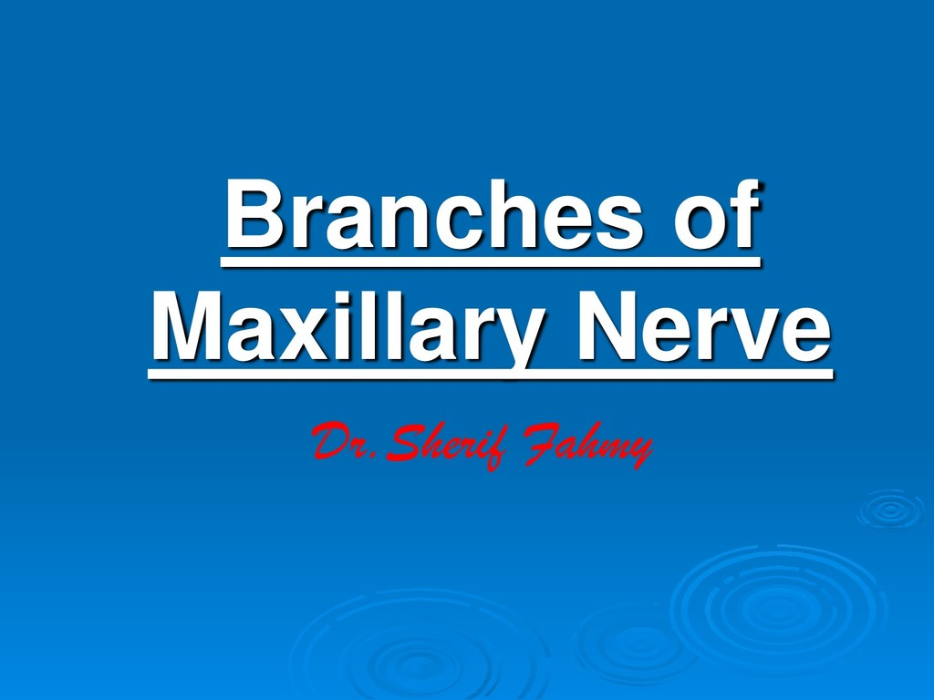 Branches of Maxillary Nerve Dr.Sherif Fahmy