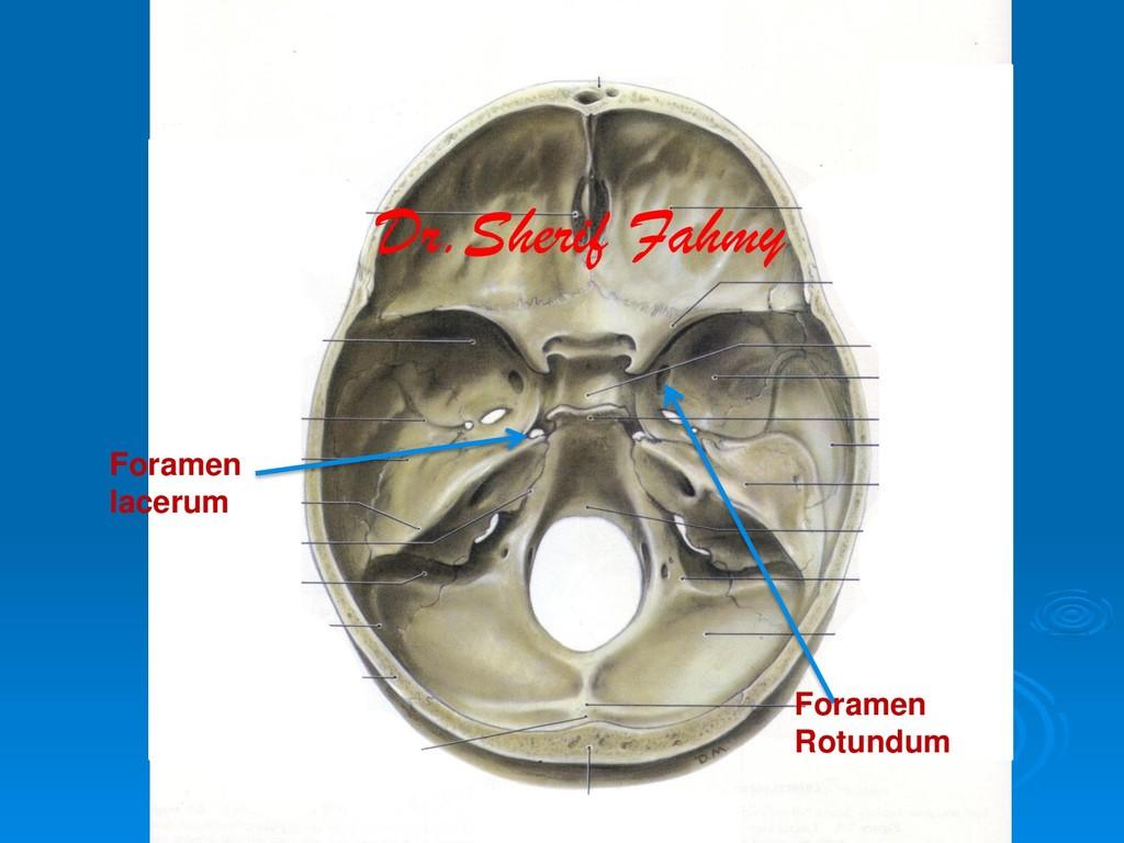 Foramen Rotundum Foramen lacerum Dr.Sherif Fahmy