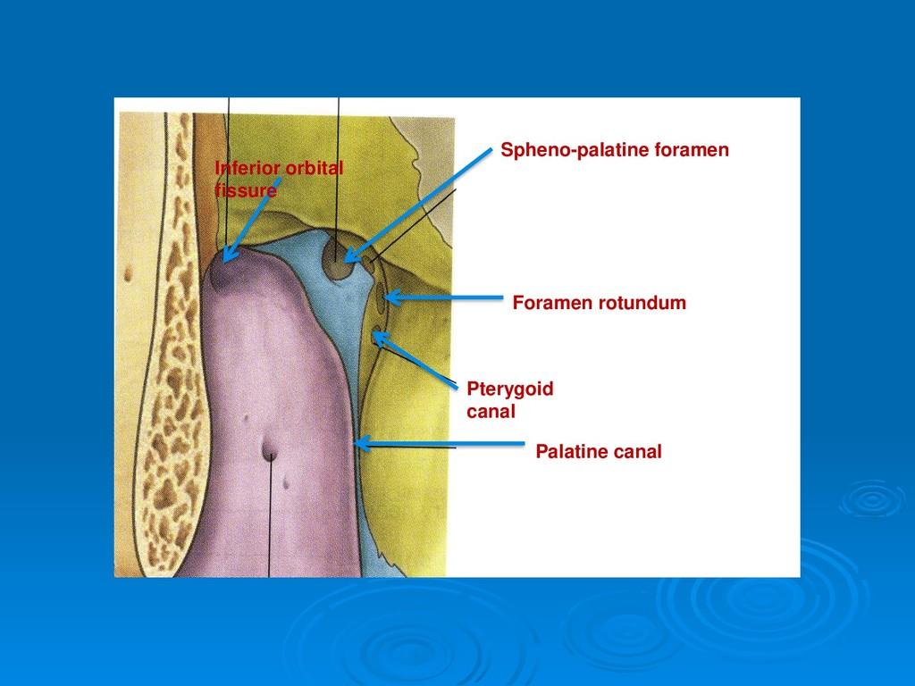 Spheno-palatine foramen Foramen rotundum Pteryg...