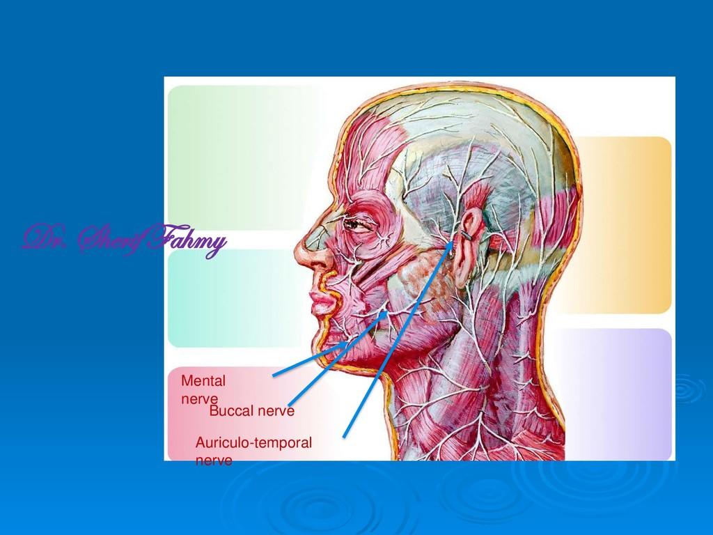 Mental nerve Buccal nerve Auriculo-temporal ner...