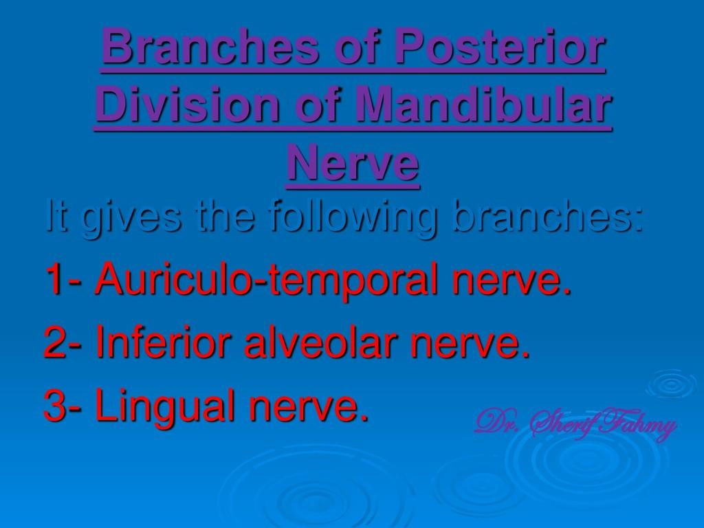 Branches of Posterior Division of Mandibular Ne...