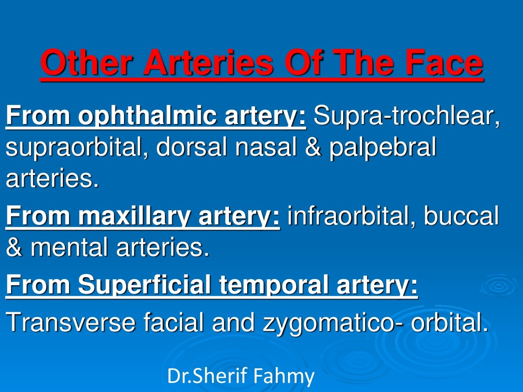 Other Arteries Of The Face From ophthalmic arte...