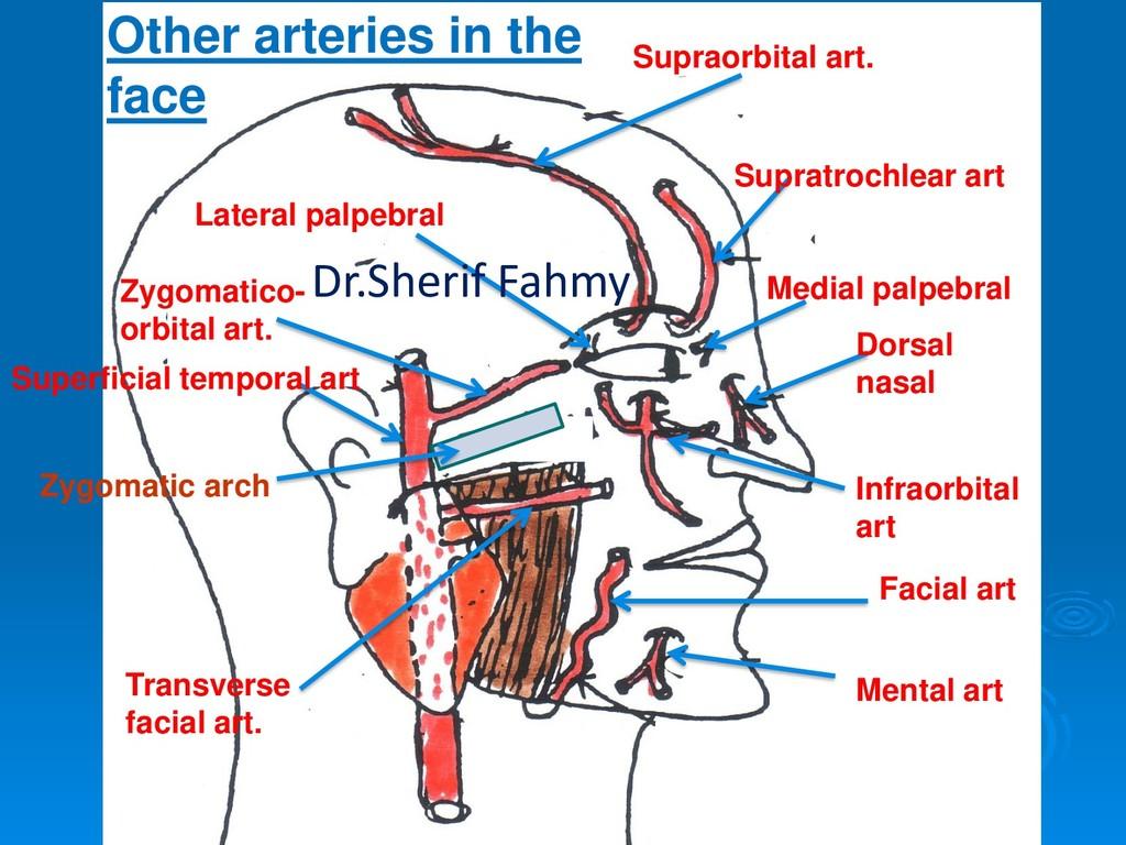 Facial art Supraorbital art. Supratrochlear art...