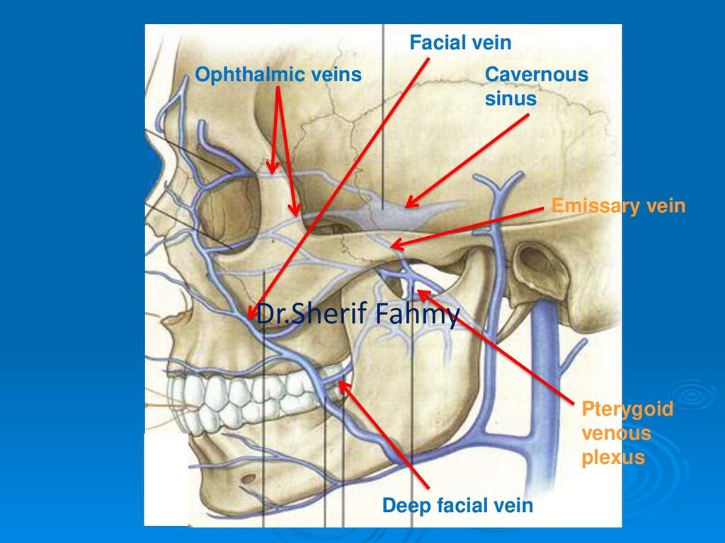 Facial vein Cavernous sinus Ophthalmic veins De...