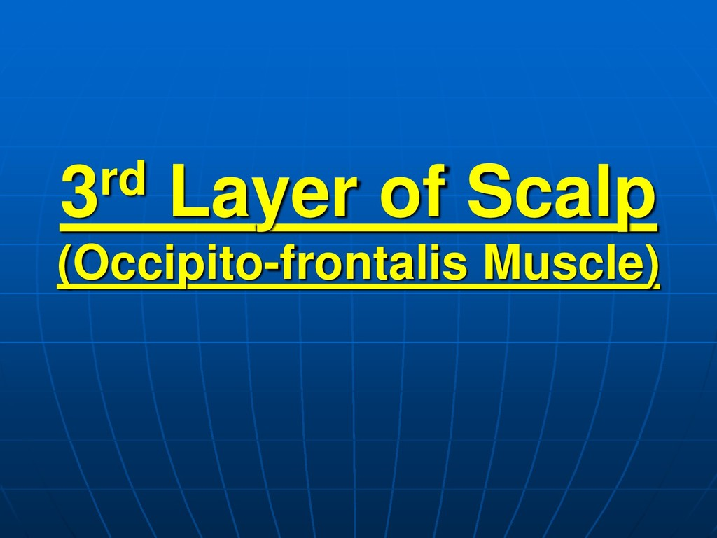 3rd Layer of Scalp (Occipito-frontalis Muscle)