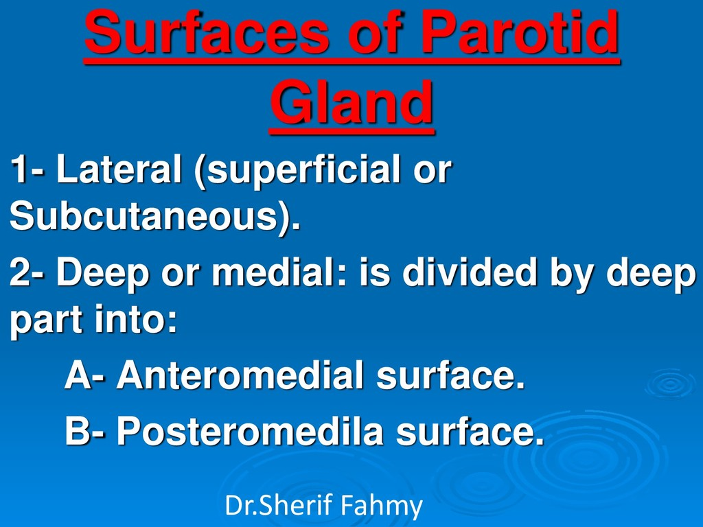 Surfaces of Parotid Gland 1- Lateral (superfici...
