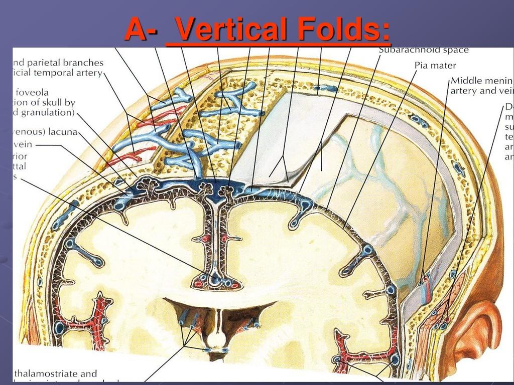 A- Vertical Folds: