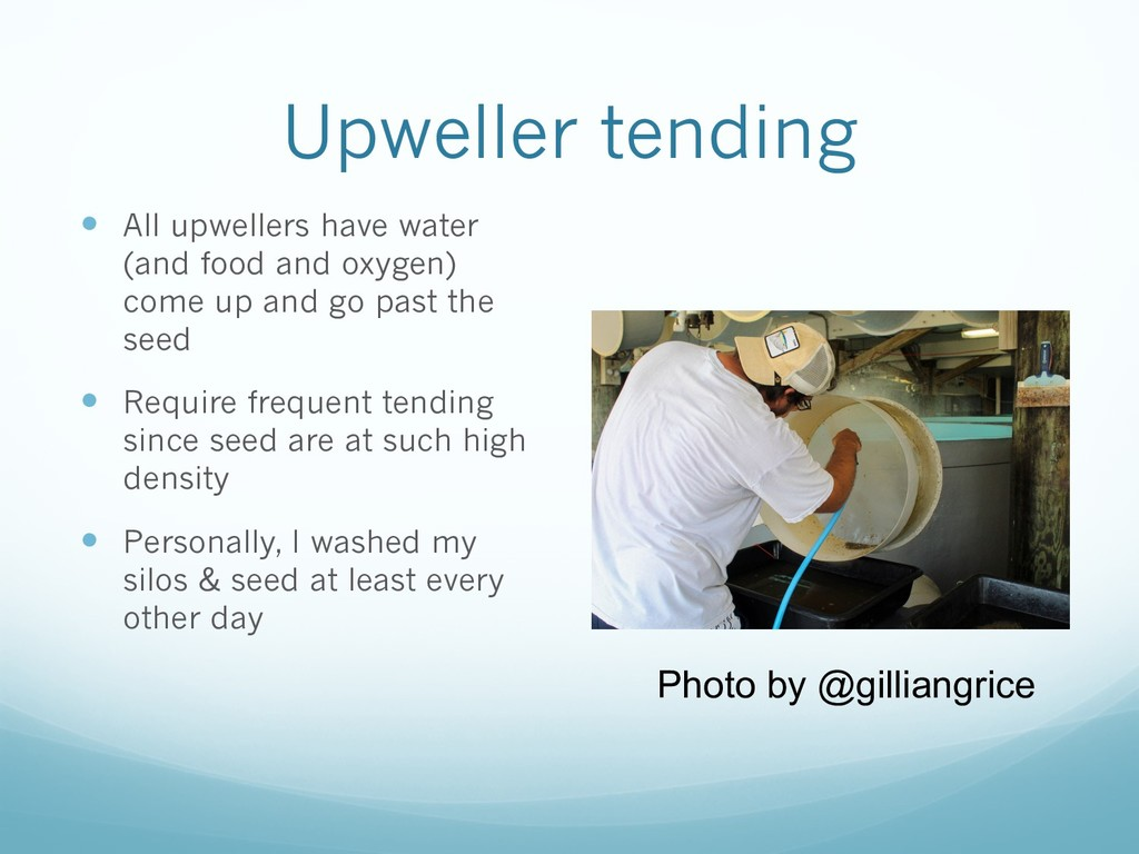 Upweller tending — All upwellers have water (an...