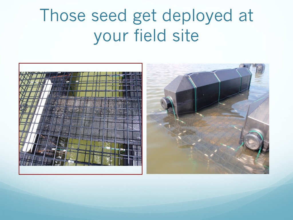 Those seed get deployed at your field site