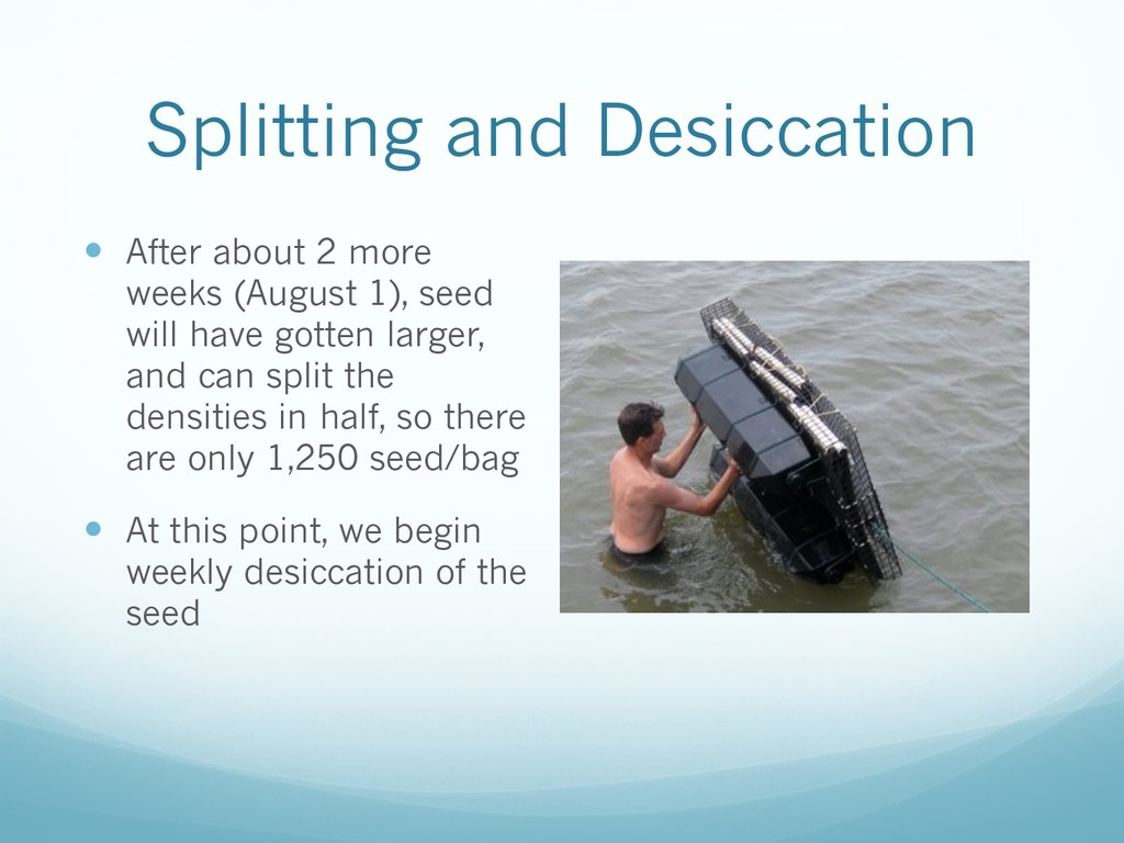 Splitting and Desiccation — After about 2 more ...