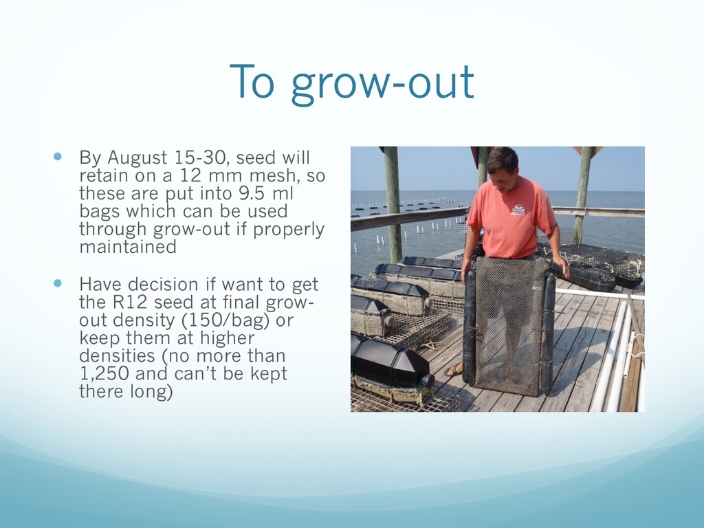To grow-out — By August 15-30, seed will retain...